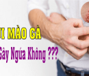 sui-mao-ga-co-gay-ngua-khong